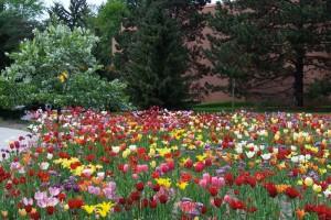 Dow_Gardens_0431