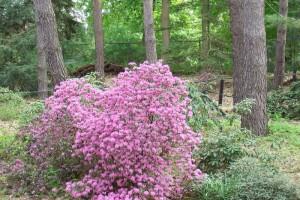 Dow_Gardens_0432