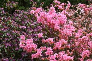 Dow_Gardens_0437