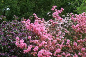 Dow_Gardens_0438
