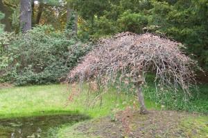 Dow_Gardens_0439