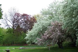 Dow_Gardens_0440