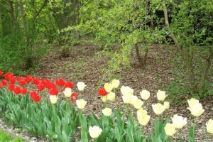 Dow_Gardens_0446