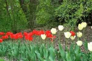 Dow_Gardens_0447