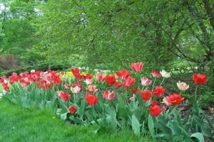 Dow_Gardens_0448