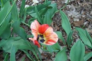 Dow_Gardens_0449