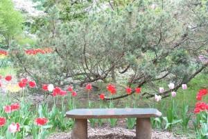 Dow_Gardens_0453