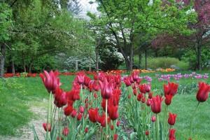 Dow_Gardens_0454
