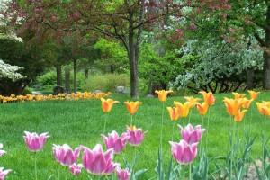 Dow_Gardens_0455