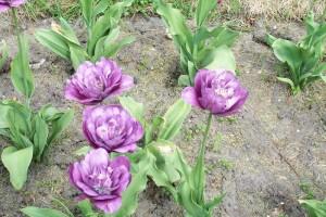 Dow_Gardens_0457