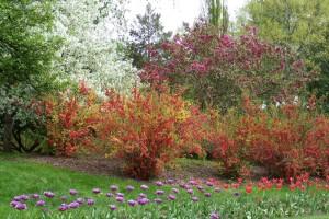 Dow_Gardens_0458