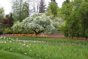 Dow_Gardens_0459
