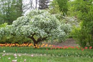 Dow_Gardens_0460