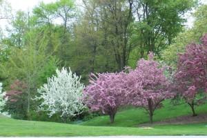 Dow_Gardens_0462