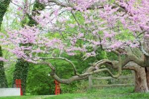 Dow_Gardens_0464