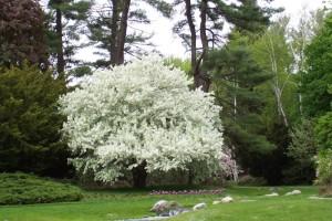 Dow_Gardens_0470