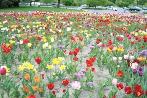 Dow_Gardens_0477