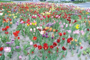 Dow_Gardens_0478