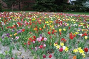 Dow_Gardens_0479