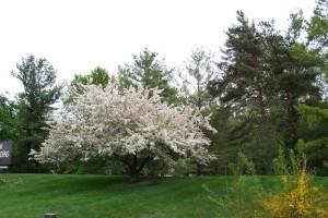 Dow_Gardens_0481