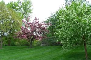 Dow_Gardens_0483