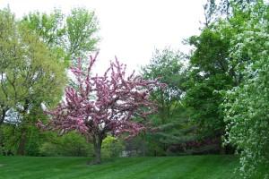 Dow_Gardens_0484
