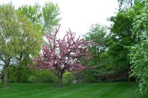 Dow_Gardens_0485